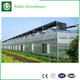 Invernadero de la PC de la agricultura del hidrocultivo