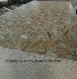 Madeira madeira 11mm OSB Board