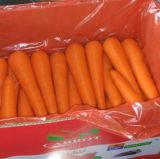 Хорошая хлебоуборка свежей моркови