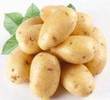 Neue Holland-Kartoffel des Getreide-2016