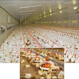 Griglia automatica di Forr del macchinario dell'azienda avicola dell'insieme completo