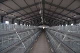 un type système de cage de poulet à rôtir pour la ferme avicole
