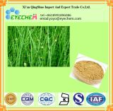 Выдержка Arvense Equisetum выдержки Horsetail кислоты 7% кремнезема