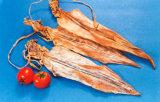 말린 음식 - 말린 오징어