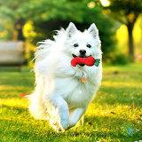 Giocattoli striduli di masticazione del cane per i cani medi e piccoli