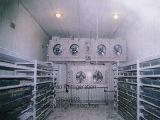 Cocina pequeño congelador de almacenamiento de un cuarto frío.