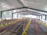 Chambre préfabriquée personnalisée de volaille de structure métallique