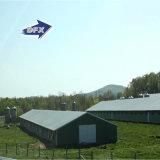 Vertiente moderna de la granja de pollo de la estructura de acero del bajo costo