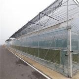 Hydroponicシステムが付いている単一のスパンのマルチスパンのガラス温室