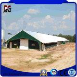 Casa de galinha de aço dos edifícios de frame de aço para a venda