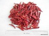 Hot Piment rouge