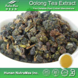 100% натуральные чай Oolong Polyphenols Extract (30-90%)