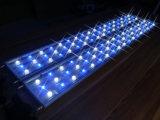 Luzes por atacado do diodo emissor de luz do aquário 162W da alta qualidade 150cm
