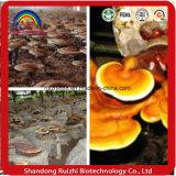 Ruishi/Lingzhi/Ganoderma Lucidum Shell-Unterbrochenes Spore-Öl