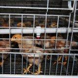 Горячий оцинкованный автоматическая куриные каркас для выращивания бройлеров и Pullets