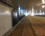 High-End Quality off Raising Broiler Equipment