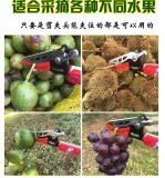 La raccoglitrice telescopica manuale della frutta di estensione lunga con l'albero Pruner ed ha veduto lo strumento di raccolto della frutta