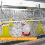 Hは赤ん坊の鶏のための装置を上げている若めんどりをタイプする