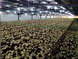 Chambre de poulet chaude de construction d'aviculture de structure métallique de vente avec le matériel
