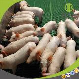 Types de pot de porc