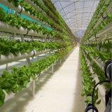 2017 토마토를 위한 Hydroponic 시스템을%s 가진 최신 판매 중국 공장 필름 녹색 집