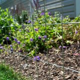 Наградная гальванизированная сваренная сталью загородка сада провода