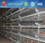 Bateria de alta capacidade de equipamento de aves de Granja Cage