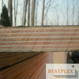 La película de la alta calidad hizo frente a la madera contrachapada, madera contrachapada de la construcción, madera contrachapada 1220*2440*9-21m m del encofrado
