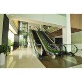 Controle Vvvf escada rolante comercial com 30 grau 1000mm/800mm/600mm de largura do Degrau