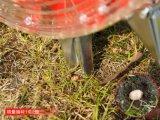 Машина сеялки мозоли руки сеялки Agro сеялки машинного оборудования ручная