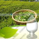 Tee-Polyphenol des grüner Tee-Auszug-40% ~98%
