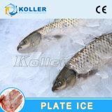 漁業によって使用される版の製氷機5tons/Day (PM50)
