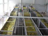 Pequeno investimento médio de processamento de cereja em conserva de automação