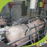 Hoge het Werpen van de Zeug van de Apparatuur van de Varkensfokkerij van het Tarief van de Overleving Pen