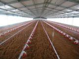 Het goedkope Huis van het Landbouwbedrijf van Chincken van de Prijs