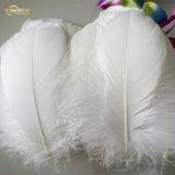 Venda por grosso de Pato Branco em bruto para baixo para o travesseiro/edredão de penas de material de enchimento
