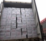 Venta caliente de cultivo fresco de calidad Premium Guisantes enlatados
