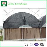 Tomate que planta la casa verde de cristal del túnel del Multi-Palmo