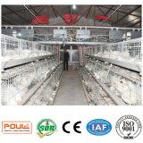 Heiße Qualitäts-automatische Geflügel-Vogel-Rahmen für Schicht-Brathühnchen