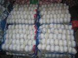 I cinesi esportano l'aglio bianco puro di buona qualità