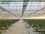 Multi serra moderna della pellicola del pomodoro della portata