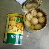 中国は新しい穀物からの全きのこ2500gを缶詰にした