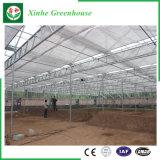 Chambres vertes en verre/de cavité en verre Tempered de jardin pour la fleur