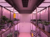 Indoor Plant GrowthおよびScience Research UsingのためのHigh Intensity SupplyingのLED Lighting System WhichとのPlant Growth Chamber/Plant Incubatorの歩行