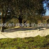 Jungfrau PET Ernte-olivgrünes Netz mit UVzusätzen (YHZ-HON05)