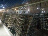 Installeer Huis van de Kip van het Gevogelte van de Structuur van het Staal snel het Geprefabriceerde