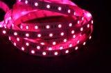 indicatore luminoso di striscia rigido di colore LED di 5050SMD LED Rgbww 5 in 1 barra flessibile della striscia LED dei chip LED