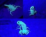12 LED UV antorcha para encontrar tinción de detección de escorpión de orina Linterna ultravioleta de luz ultravioleta
