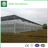 Invernadero profesional de la película plástica para el crecimiento del tomate y de la flor