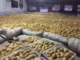 Chinois 2017 de la nouvelle récolte de pommes de terre fraîches